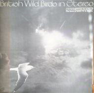 British Wild Birds in Stereo